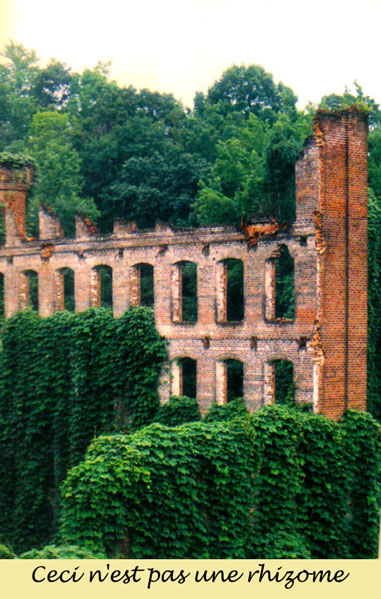 """""""wall and kudzu"""" by Neil Smith on Flickr http://bit.ly/1FzQ1XX (CC BY-NC-SA 2.0)"""